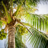 The Coconut Oil Craze – Should I Jump on the Bandwagon Too?